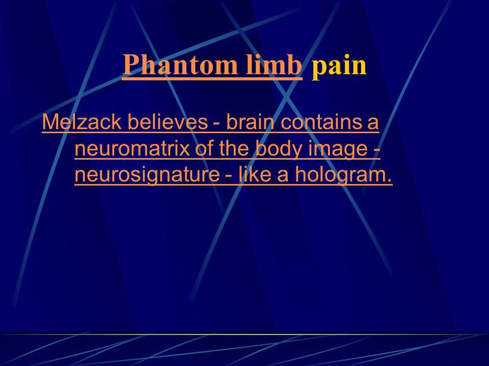 Phantom limbPhantom limb pain Melzack believes - brain contains a neuromatrix of the body image - neurosignature - like a hologram.