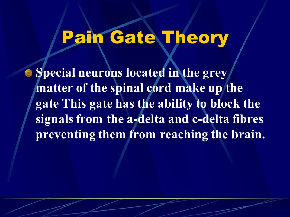 Pain Gate Theory Special neurons located in the grey matter of the spinal cord make up the gate This gate has the ability to block the signals from the a-delta and c-delta fibres preventing them from reaching the brain.