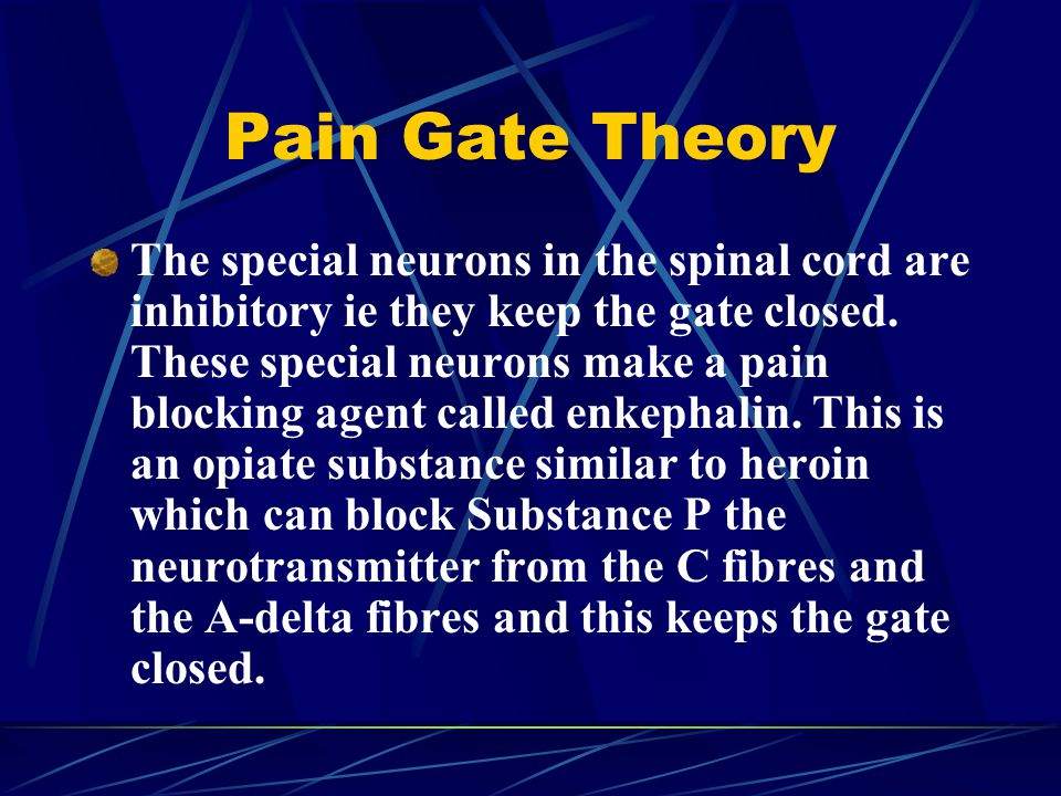Pain Gate Theory The special neurons in the spinal cord are inhibitory ie they keep the gate closed.