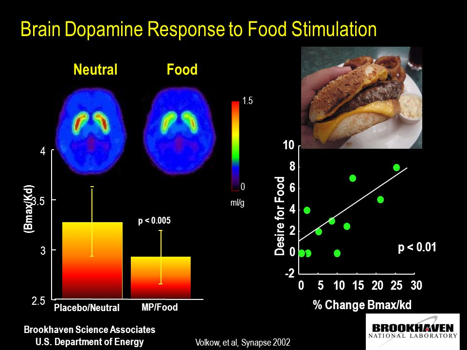 Brookhaven Science Associates U.S. Department of Energy Brain Dopamine Response to Food Stimulation (Bmax/Kd) 2.5 3 3 3.5 4 4 Placebo/Neutral MP/Food