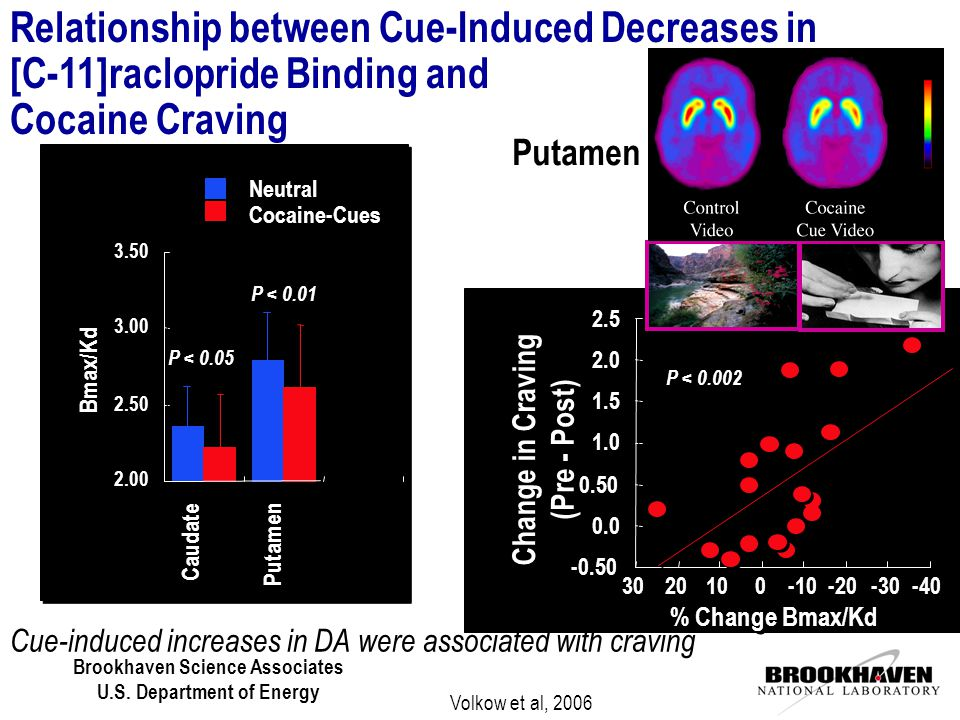 Cue-induced increases in DA were associated with craving P < 0.002 % Change Bmax/Kd -0.50 0.0 0.50 1.0 1.5 2.0 2.5 -40 -30 -20 -10 0 0 10 20 30 Putamen Change in Craving (Pre - Post) Relationship between Cue-Induced Decreases in [C-11]raclopride Binding and Cocaine Craving Caudate Putamen 2.00 2.50 3.00 3.50 Neutral Cocaine-Cues Bmax/Kd P < 0.05 P < 0.01 Volkow et al, 2006
