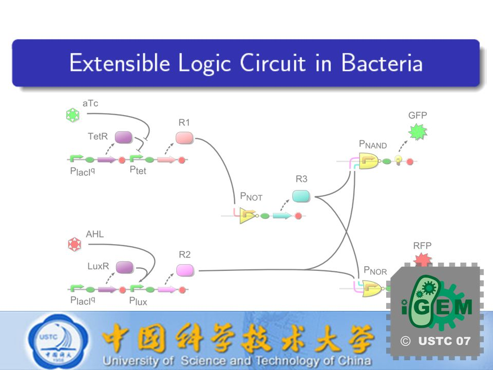 USTC iGEM 2007 Extensible Logic Circuit in Bacteria Directed Evolution Select Target Sites Mutagenesis by PCR Screen on Plates Quality Control Quantitative Measurements Result Analysis Repression Matrix Diagonal Repression Matrix
