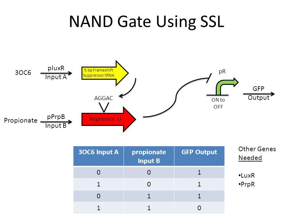 NAND Gate Using SSL 3OC6 Input Apropionate Input B GFP Output 001 101 011 110 5 bp Frameshift Suppressor tRNA pluxR Input A pPrpB Input B Repressor cI