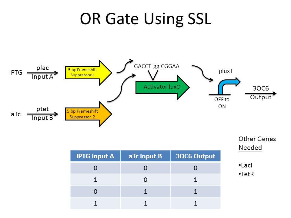 OR Gate Using SSL GACCT gg CGGAA Activator luxO IPTG Input AaTc Input B3OC6 Output 000 101 011 111 5 bp Frameshift Suppressor 1 5 bp Frameshift Suppre