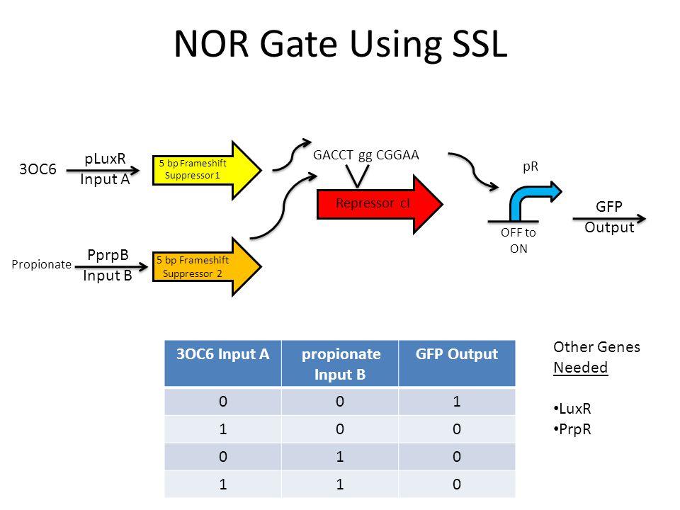 NOR Gate Using SSL GACCT gg CGGAA Repressor cI 3OC6 Input A propionate Input B GFP Output 001 100 010 110 5 bp Frameshift Suppressor 1 5 bp Frameshift