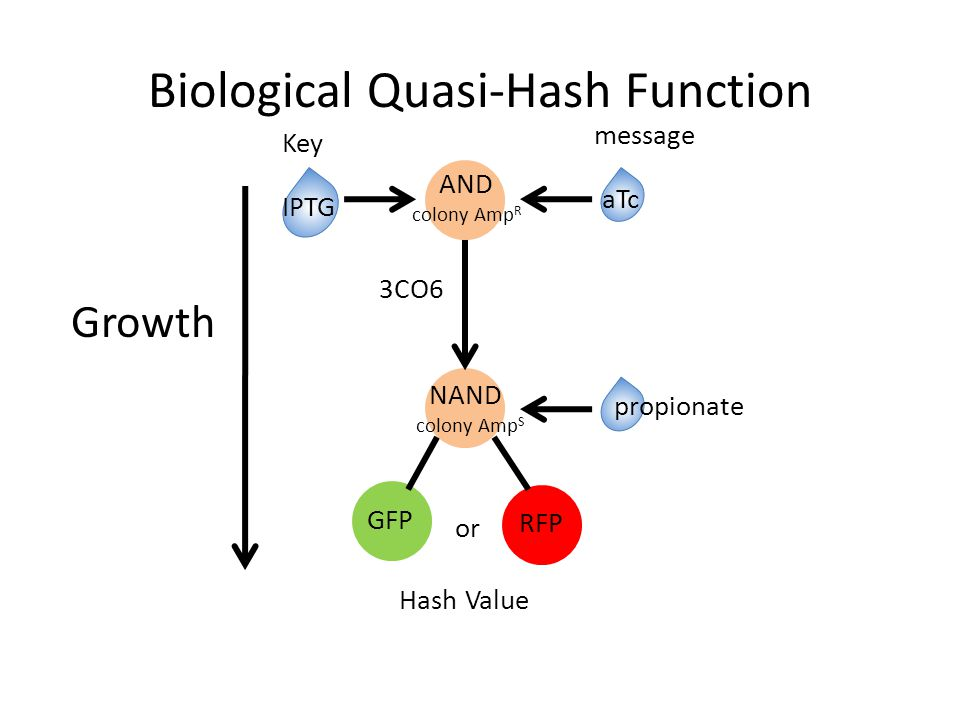 AND colony Amp R NAND colony Amp S Biological Quasi-Hash Function IPTG aTc propionate 3CO6 GFP RFP or Key message Hash Value Growth