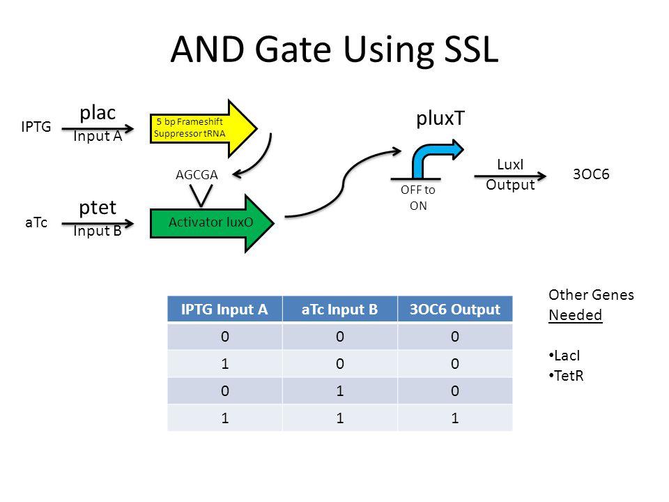 AND Gate Using SSL IPTG Input AaTc Input B3OC6 Output 000 100 010 111 5 bp Frameshift Suppressor tRNA plac Input A ptet Input B Activator luxO AGCGA L