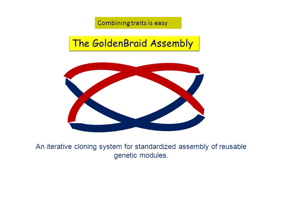 Combining traits is easy The GoldenBraid Assembly An iterative cloning system for standardized assembly of reusable genetic modules.