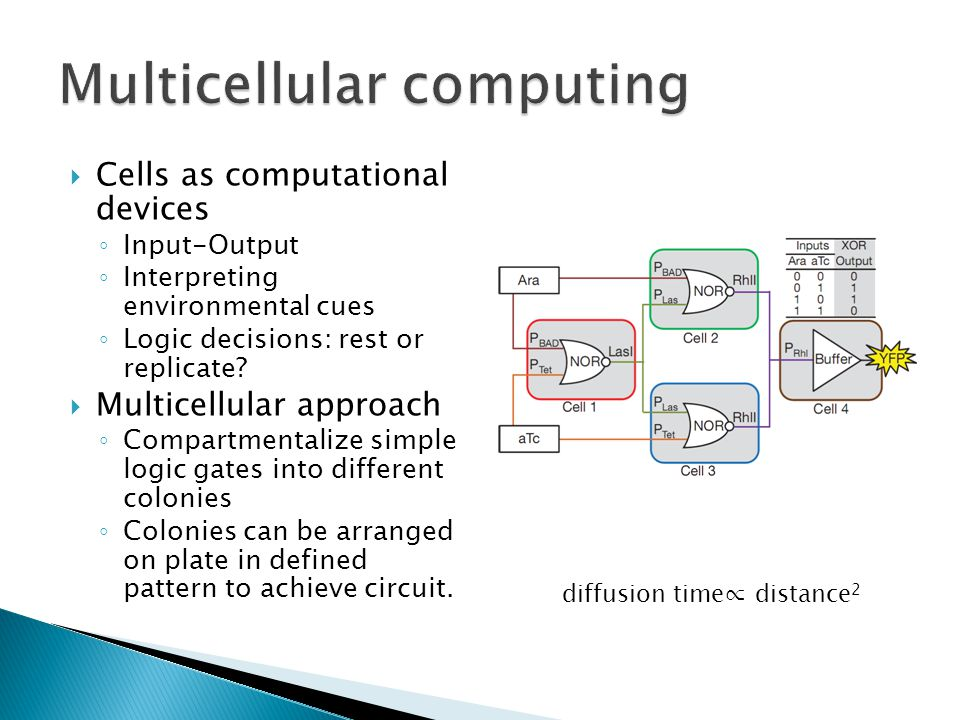 Cells as computational devices Input-Output Interpreting environmental cues Logic decisions: rest or replicate.