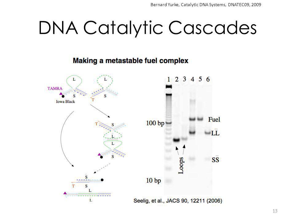 DNA Catalytic Cascades 13 Bernard Yurke, Catalytic DNA Systems, DNATEC09, 2009