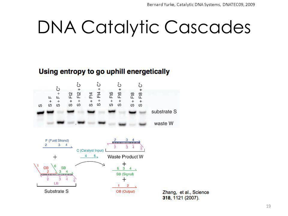 DNA Catalytic Cascades 19 Bernard Yurke, Catalytic DNA Systems, DNATEC09, 2009