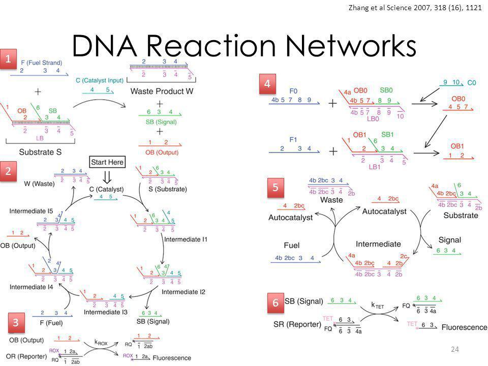 DNA Reaction Networks 24 Zhang et al Science 2007, 318 (16), 1121 1 1 2 2 3 3 4 4 5 5 6 6