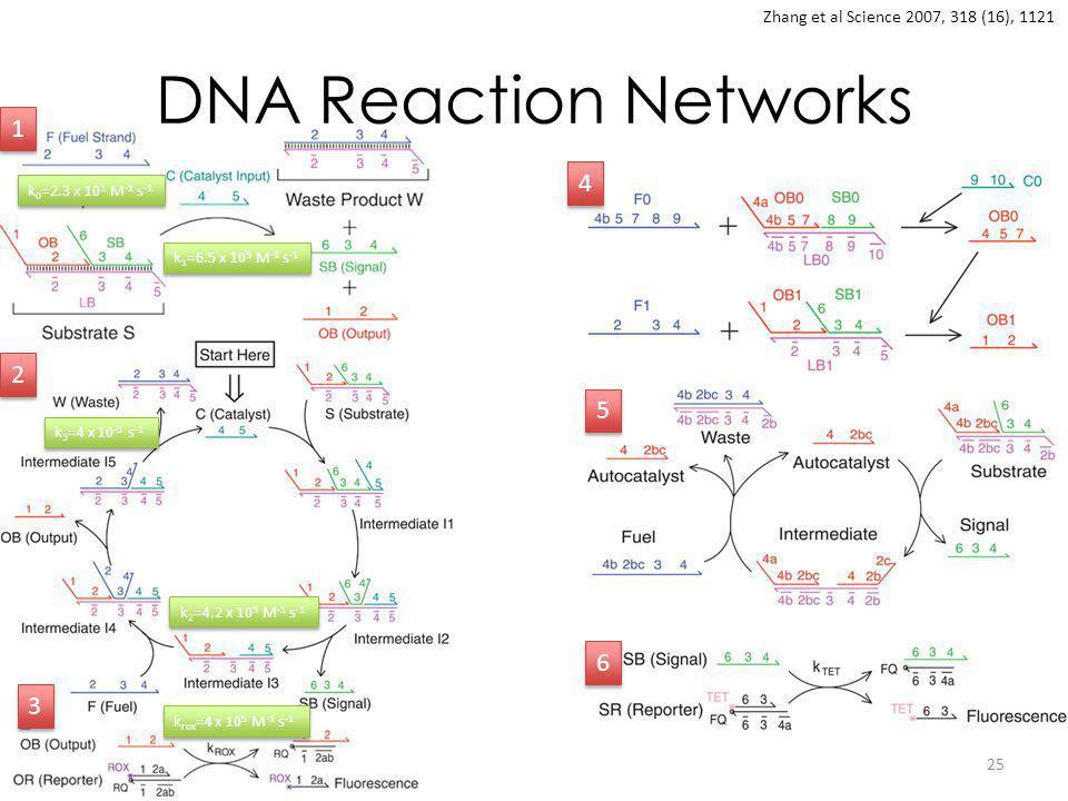 DNA Reaction Networks 25 Zhang et al Science 2007, 318 (16), 1121 1 1 2 2 3 3 4 4 5 5 6 6 k 0 =2.3 x 10 1 M -1 s -1 k 1 =6.5 x 10 5 M -1 s -1 k 2 =4.2 x 10 5 M -1 s -1 k 3 =4 x 10 -3 s -1 k rox =4 x 10 5 M -1 s -1