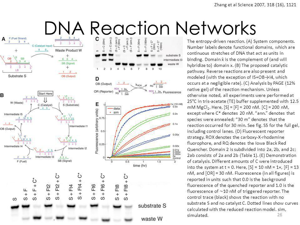 DNA Reaction Networks 26 Zhang et al Science 2007, 318 (16), 1121 The entropy-driven reaction. (A) System components. Number labels denote functional