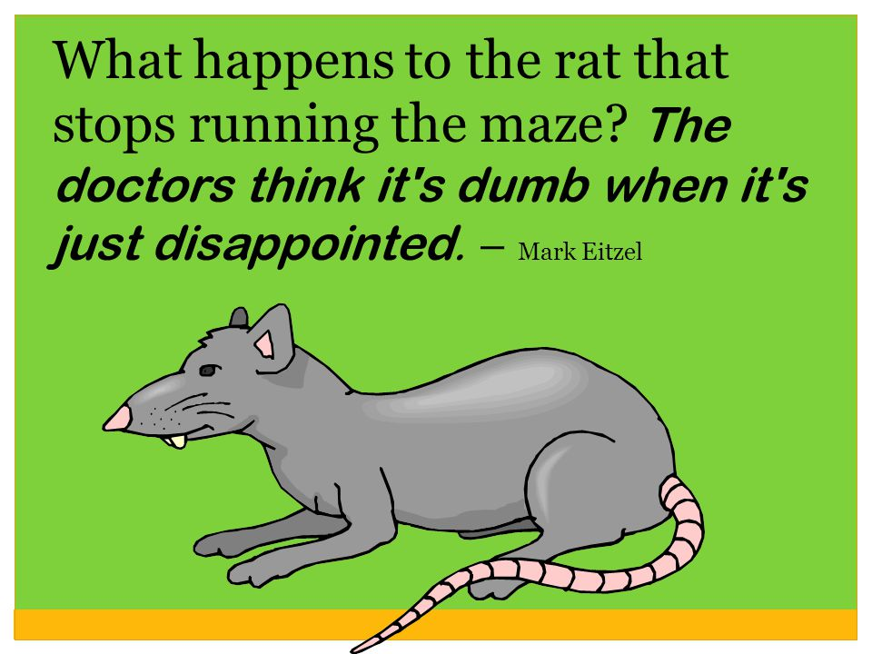 What happens to the rat that stops running the maze.