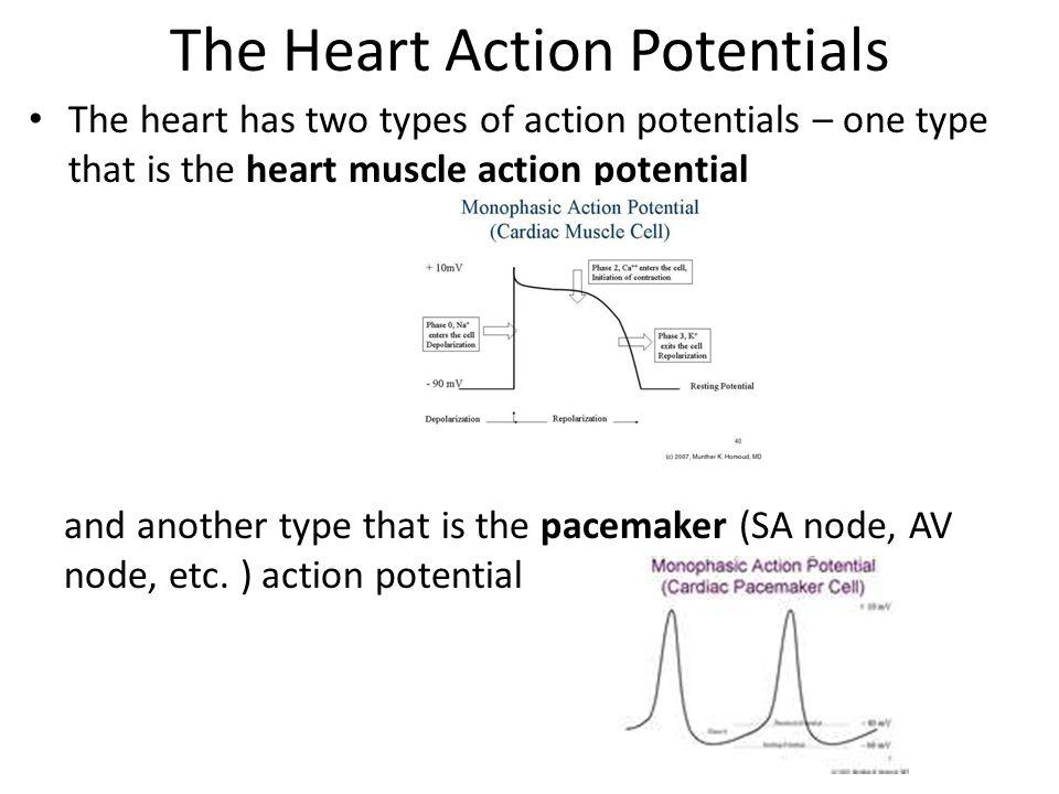 NO TETANY The heart muscle should never go into tetany.