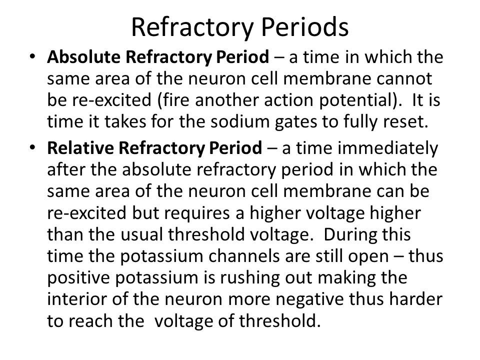 Refractory Periods Absolute Refractory Period – a time in which the same area of the neuron cell membrane cannot be re-excited (fire another action po