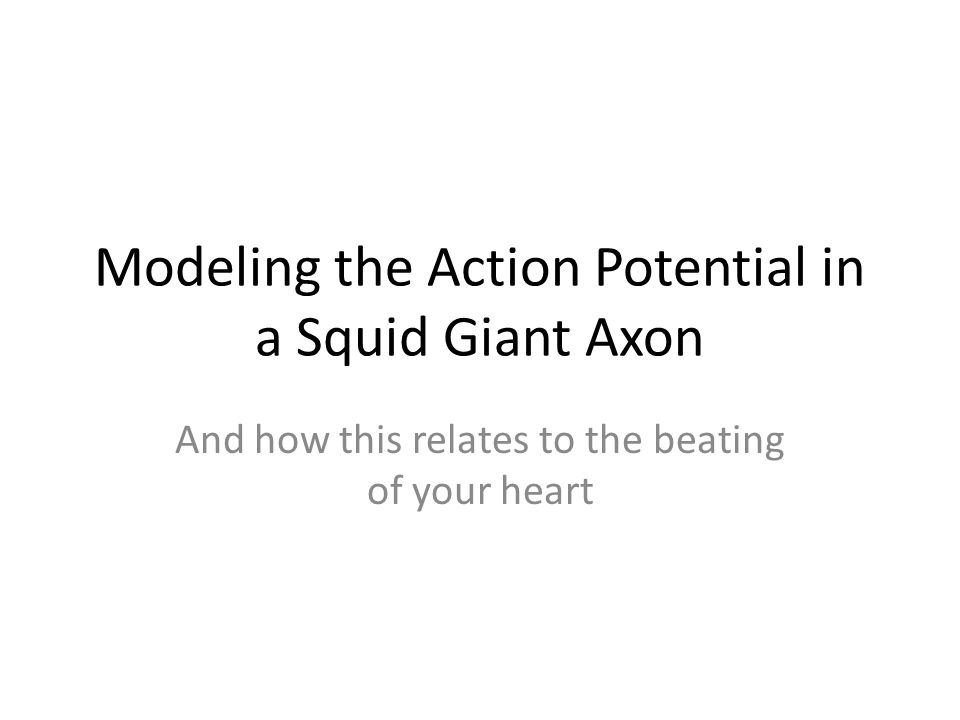 Modeling the Action Potential in a Squid Giant Axon And how this relates to the beating of your heart