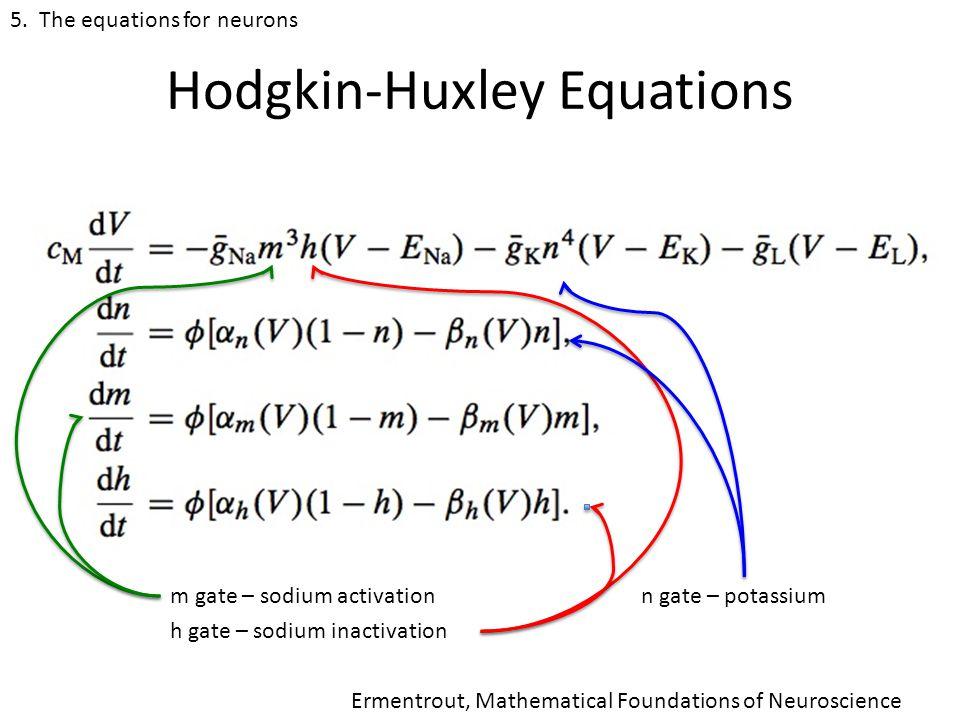 Hodgkin-Huxley Equations m gate – sodium activation h gate – sodium inactivation n gate – potassium 5.