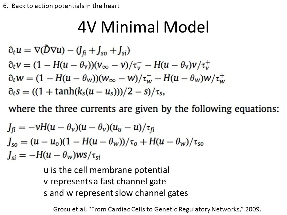4V Minimal Model u is the cell membrane potential v represents a fast channel gate s and w represent slow channel gates 6.