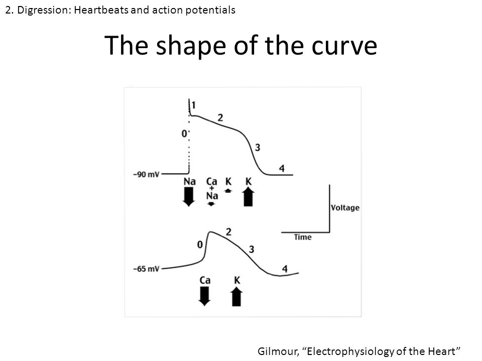 The shape of the curve Gilmour, Electrophysiology of the Heart 2.