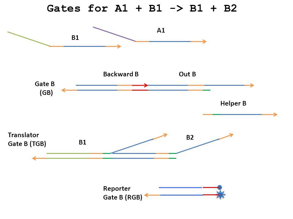 A1 B1 Backward BOut B Helper B B1 B2 Gate B (GB) Translator Gate B (TGB) Reporter Gate B (RGB) Gates for A1 + B1 -> B1 + B2