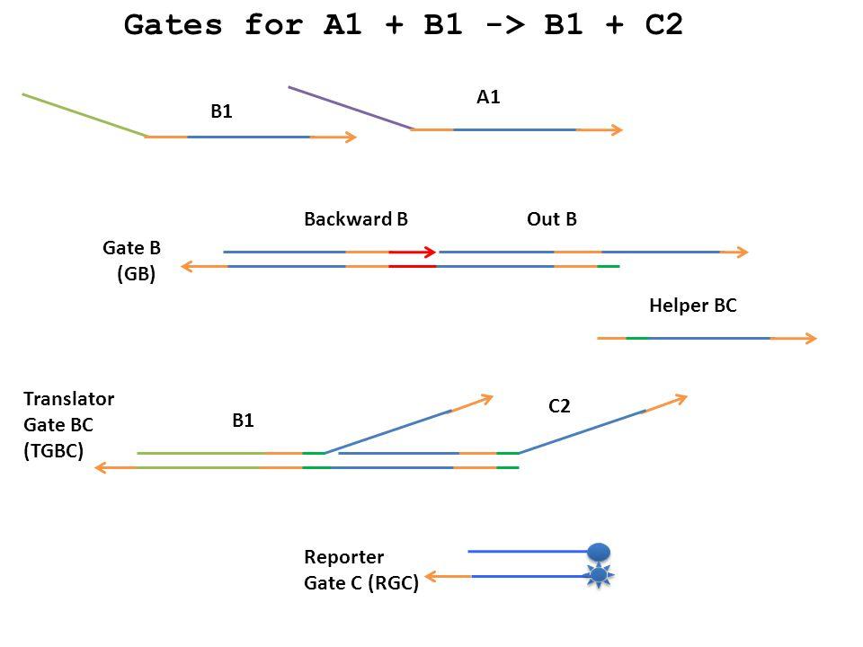 A1 B1 Backward BOut B Helper BC B1 C2 Gate B (GB) Translator Gate BC (TGBC) Reporter Gate C (RGC) Gates for A1 + B1 -> B1 + C2