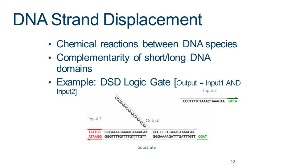 DNA Strand Displacement Chemical reactions between DNA species Complementarity of short/long DNA domains Example: DSD Logic Gate [ Output = Input1 AND Input2] 12 Input 2 Substrate Input 1 Output