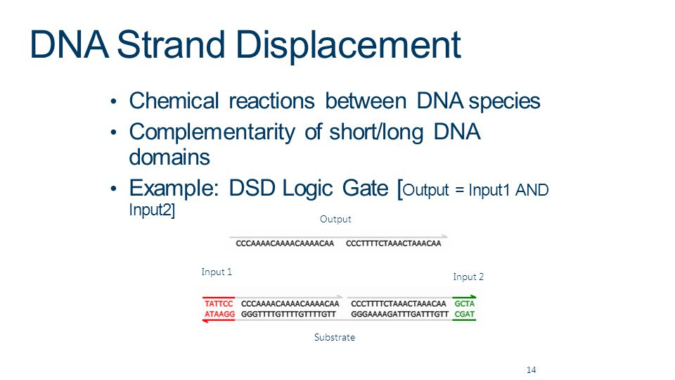 DNA Strand Displacement Chemical reactions between DNA species Complementarity of short/long DNA domains Example: DSD Logic Gate [ Output = Input1 AND Input2] 14 Input 2 Substrate Input 1 Output