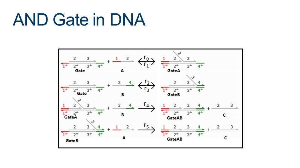 AND Gate in DNA