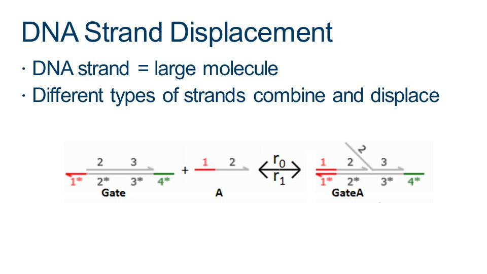 DNA Strand Displacement DNA strand = large molecule Different types of strands combine and displace