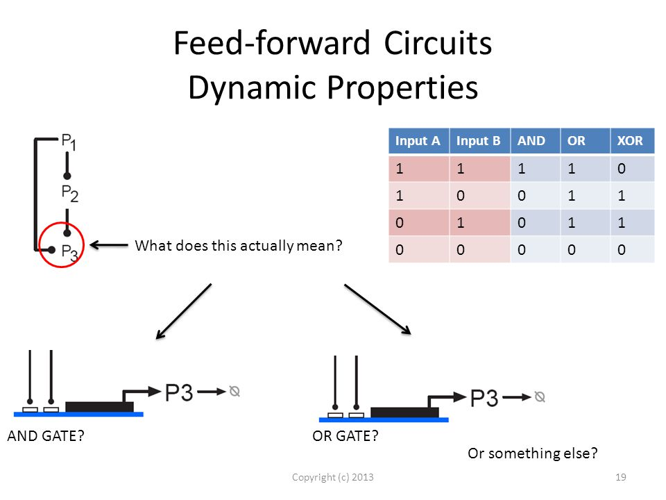 Feed-forward Circuits Dynamic Properties Copyright (c) 201319 What does this actually mean.