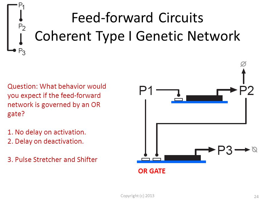 Feed-forward Circuits Coherent Type I Genetic Network Copyright (c) 2013 24 OR GATE Question: What behavior would you expect if the feed-forward network is governed by an OR gate.