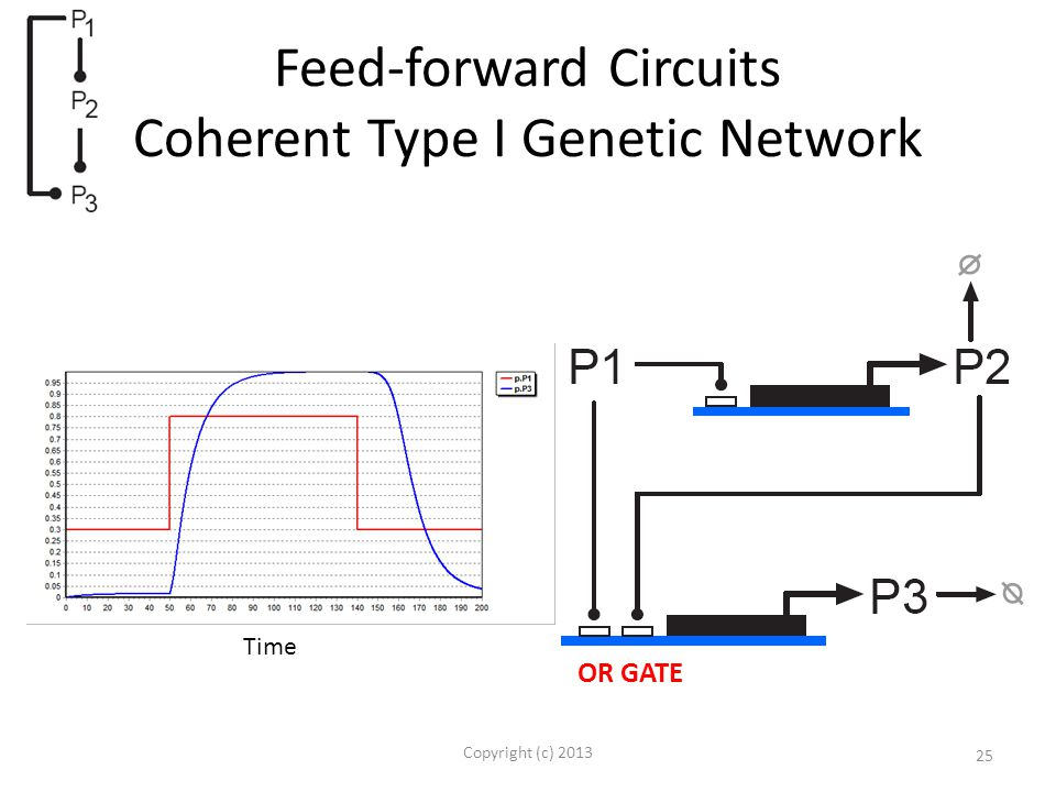 Feed-forward Circuits Coherent Type I Genetic Network Copyright (c) 2013 25 OR GATE Time