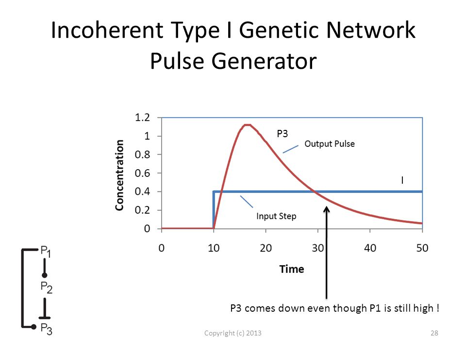Incoherent Type I Genetic Network Pulse Generator Copyright (c) 201328 P3 comes down even though P1 is still high .