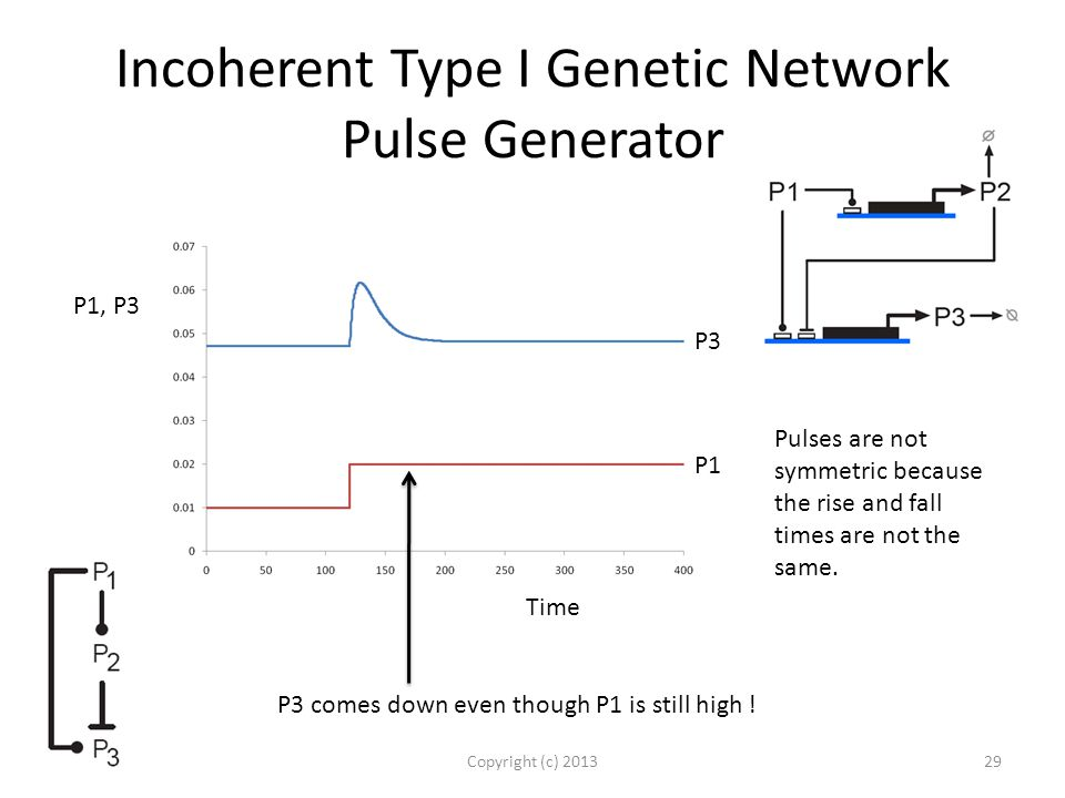 Incoherent Type I Genetic Network Pulse Generator Copyright (c) 201329 P3 comes down even though P1 is still high .