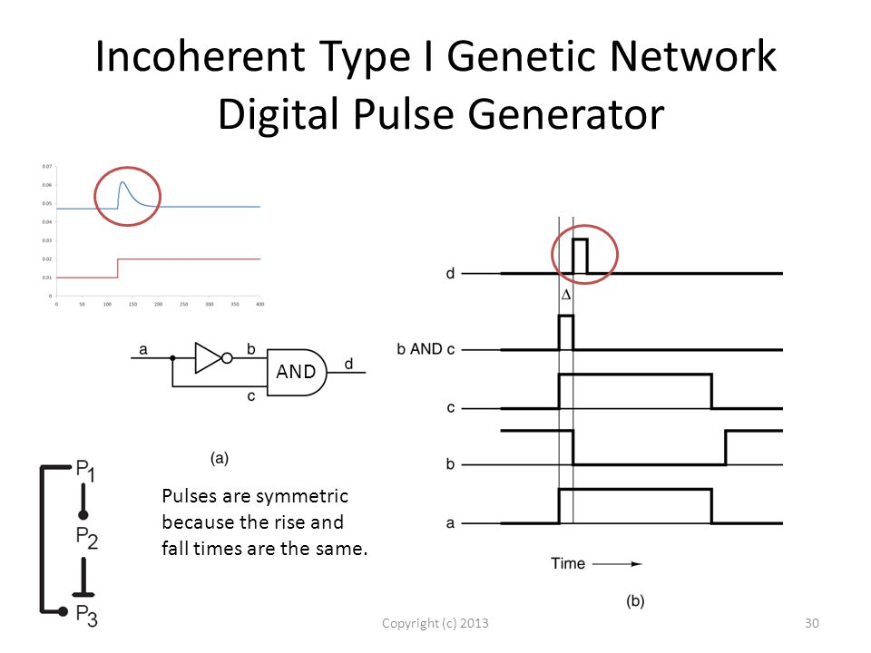 Incoherent Type I Genetic Network Digital Pulse Generator Copyright (c) 201330 Pulses are symmetric because the rise and fall times are the same.
