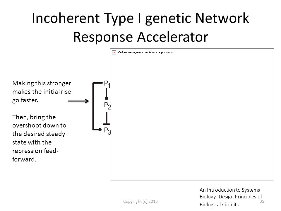 Incoherent Type I genetic Network Response Accelerator Copyright (c) 201335 Making this stronger makes the initial rise go faster.