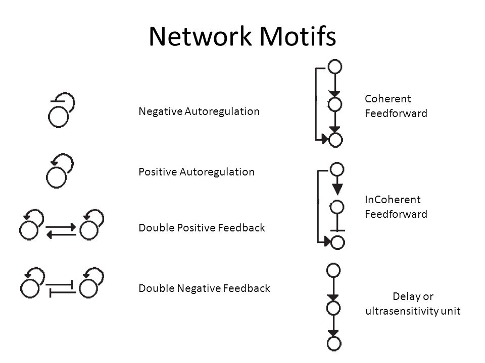 Network Motifs Negative Autoregulation Positive Autoregulation Double Positive Feedback Double Negative Feedback Coherent Feedforward InCoherent Feedforward Delay or ultrasensitivity unit
