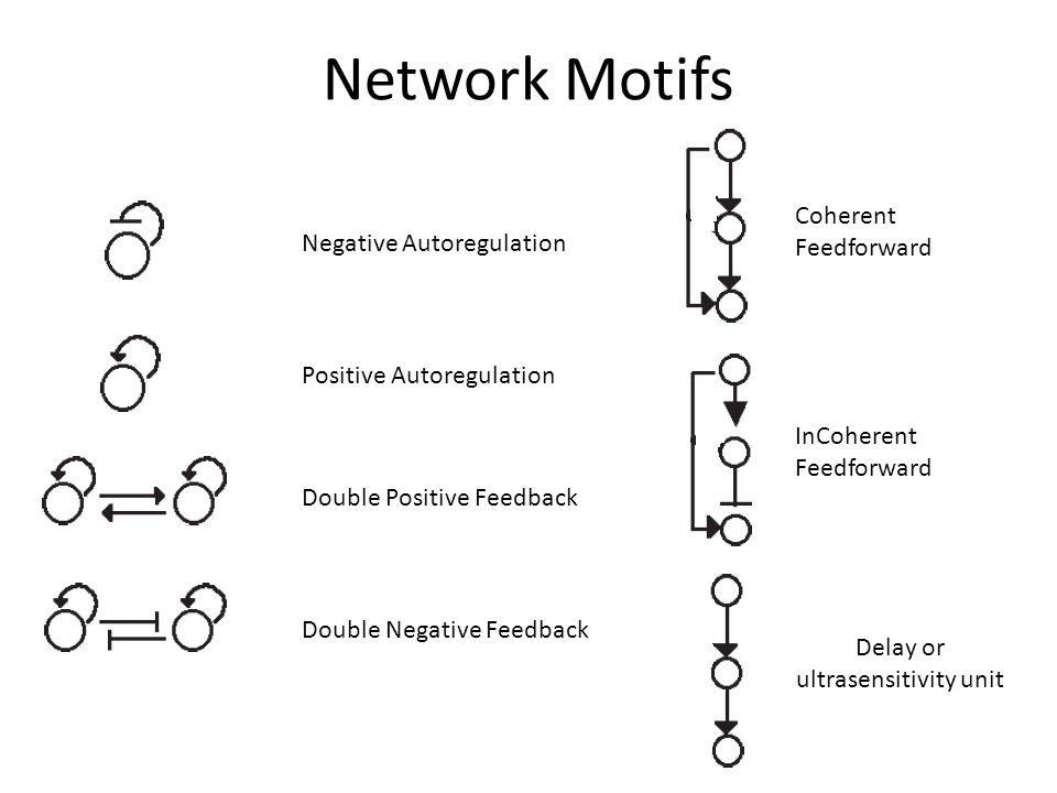 Network Motifs Multi-Output FFL Regulated Double Negative Feedback Regulated Double Positive Feedback Bi-Fan Dense Overlapping Regulons SIM – Single Input Module