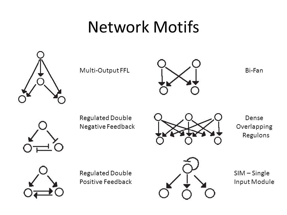Network Motifs Negative AutoregulationPositive Autoregulation 1.