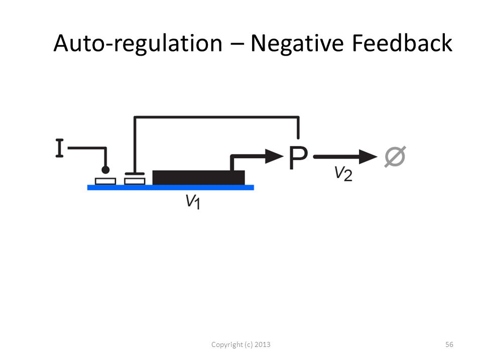 Auto-regulation – Negative Feedback Copyright (c) 201356