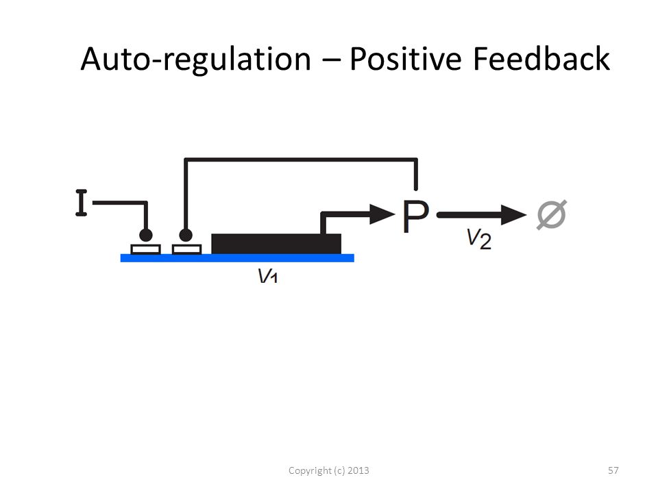 Auto-regulation – Positive Feedback Copyright (c) 201357