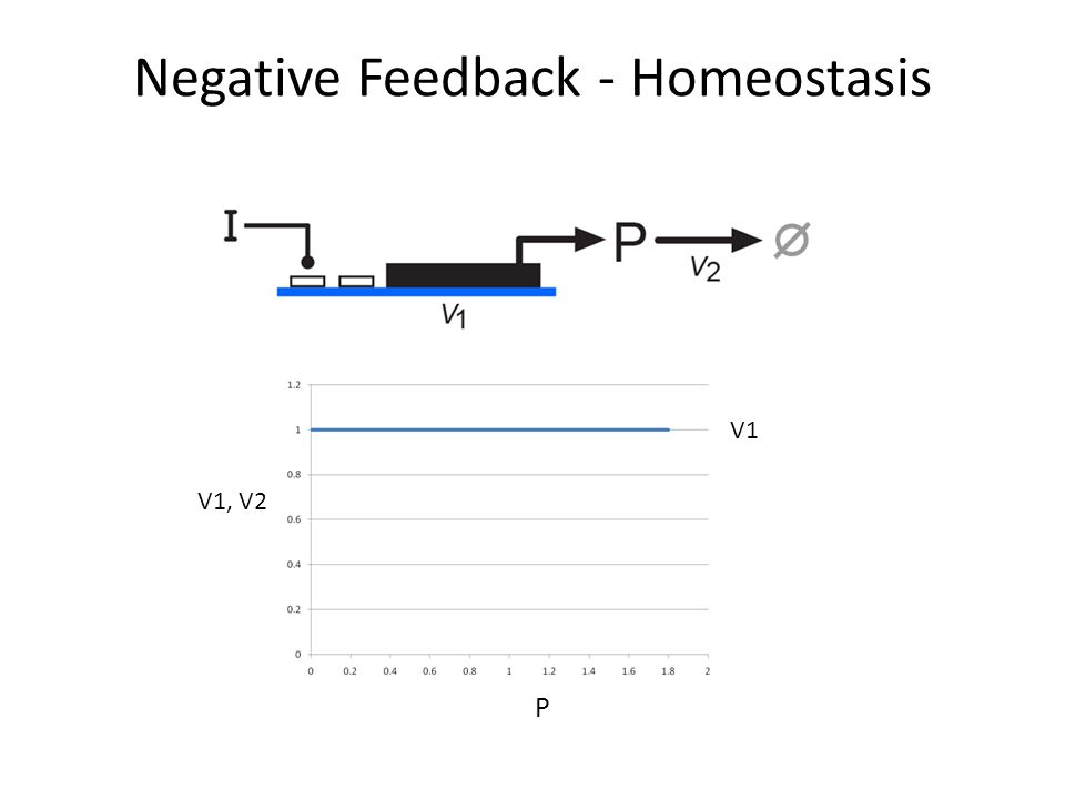 Negative Feedback - Homeostasis V1, V2 V1 P