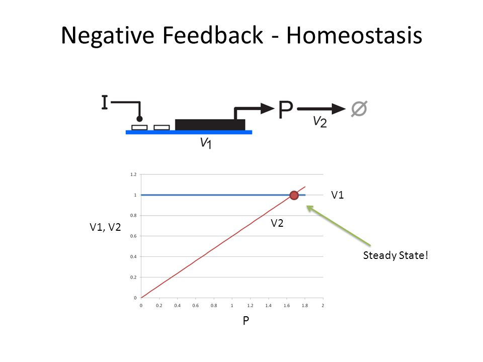 Negative Feedback - Homeostasis V1, V2 V1 P V2 Steady State!
