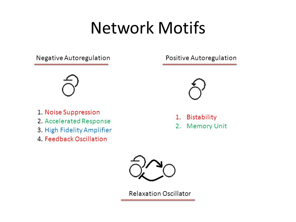 Network Motifs Memory unit where both units are either on or off Memory unit: when one unit is off the other unit is on Double Positive FeedbackDouble Negative Feedback