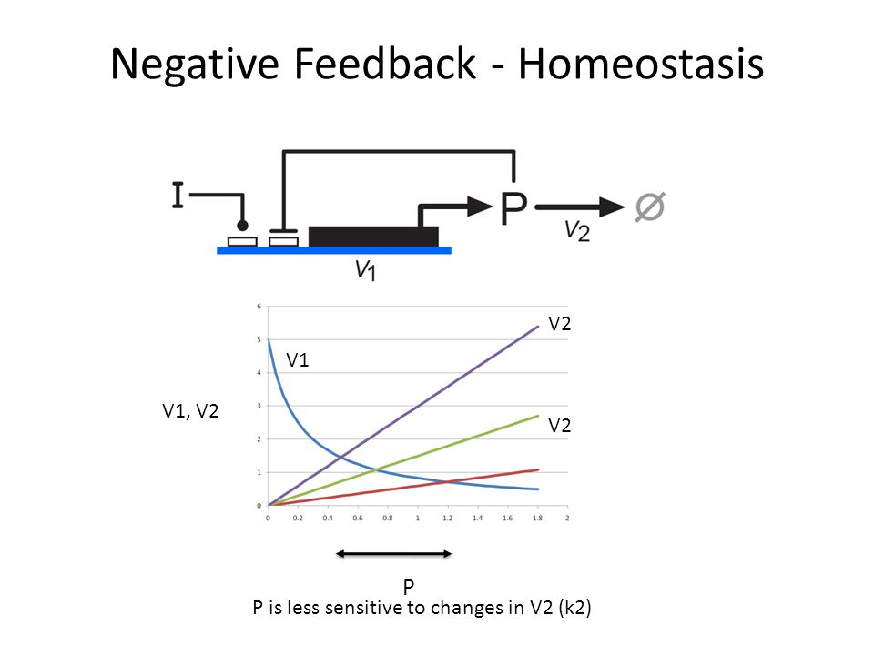 Negative Feedback - Homeostasis V1, V2 V1 P V2 P is less sensitive to changes in V2 (k2)