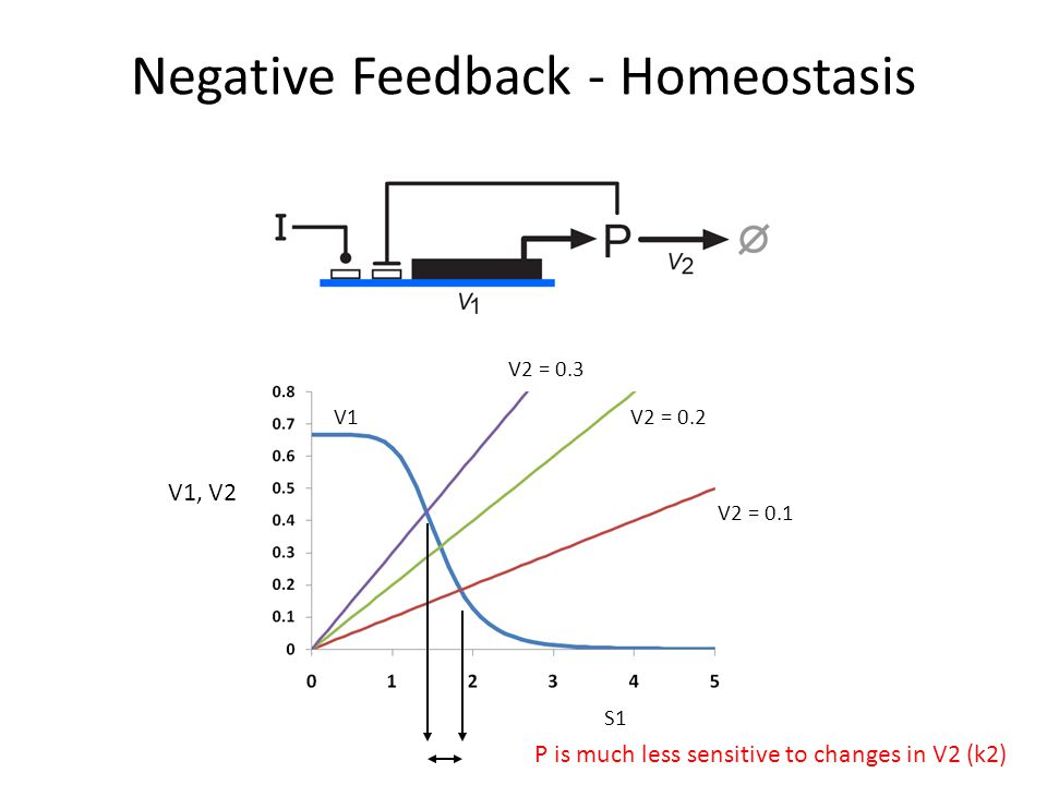 Negative Feedback - Homeostasis V1, V2 V1 V2 = 0.3 V2 = 0.2 V2 = 0.1 S1 P is much less sensitive to changes in V2 (k2)