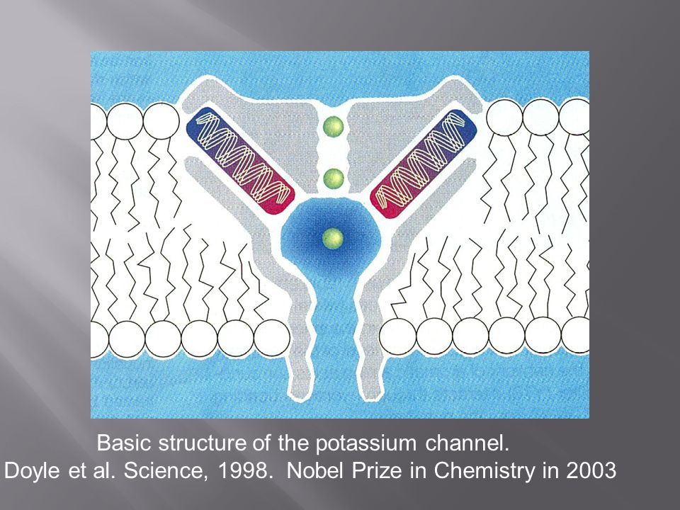 Basic structure of the potassium channel. Doyle et al. Science, 1998. Nobel Prize in Chemistry in 2003