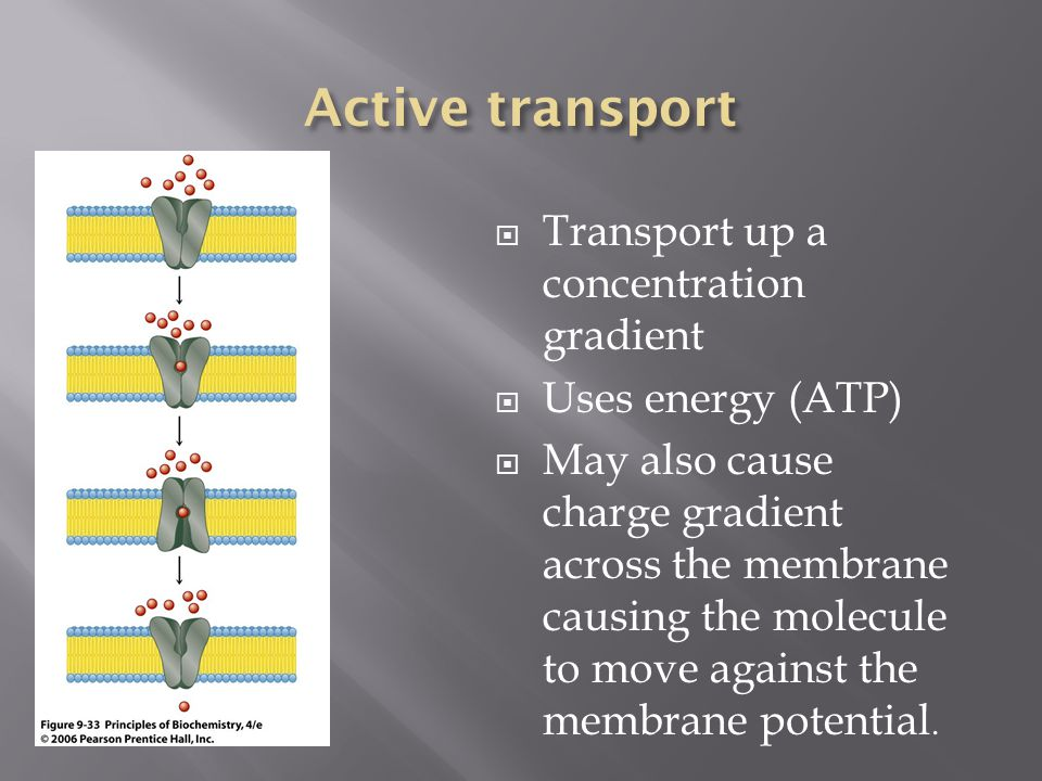 Transport up a concentration gradient Uses energy (ATP) May also cause charge gradient across the membrane causing the molecule to move against the me